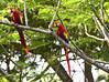 #panama , vacances au Panama, séjours, circuits, excursions, mice et DMc by Orbis-panama