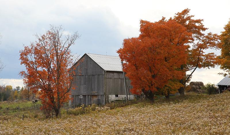 Autumn drive62