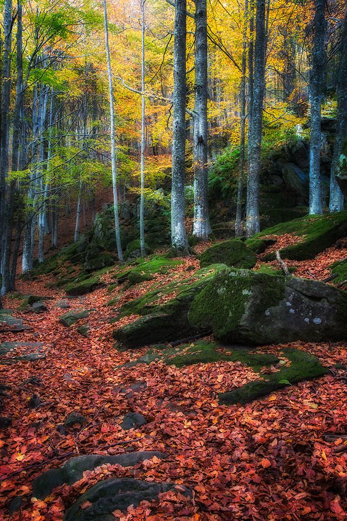 I colori dell autunno