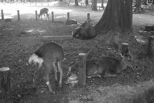 Nara on OCT 29, 2015 (7)