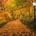 Central Park Autumn - The Ramble Fall Foliage by Vivienne Gucwa