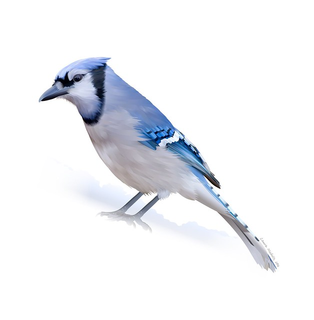 The Blue Jay, Running up That Hill