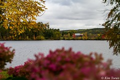 Limelight Hydrangea And October On The East Shore - Bonnechere River, Renfrew County, Ontario