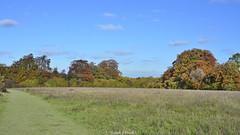 HolderAutumn Across The Meadow