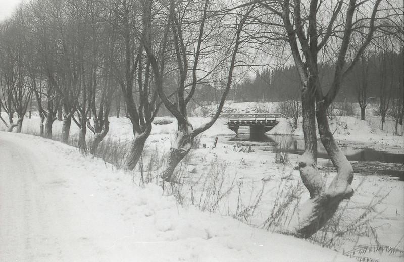 Мост в парк и ивы