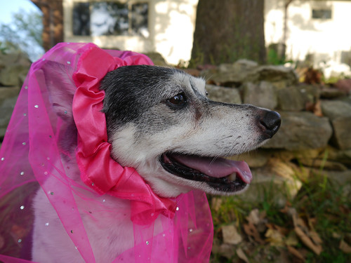 2015-09-16 - Peedee in Pink - 0020 [flickr]