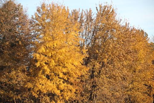 IMG_6532_Fall_Foliage