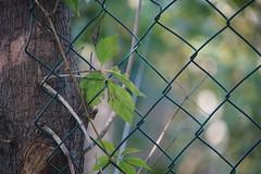 Sony A7R II - zdjęcia przykładowe
