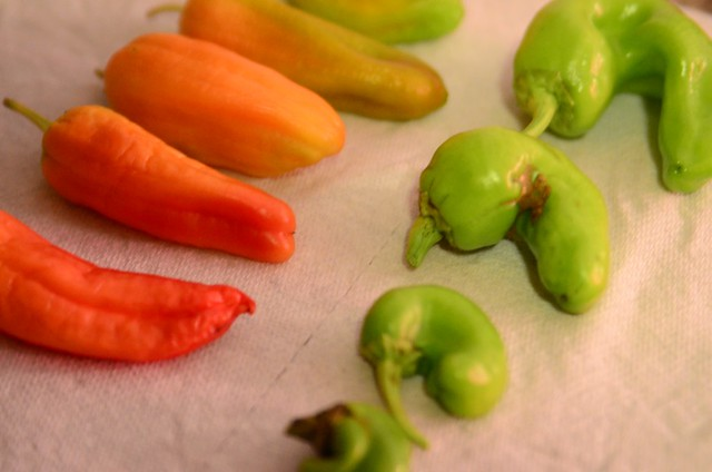 a rainbow of peppers