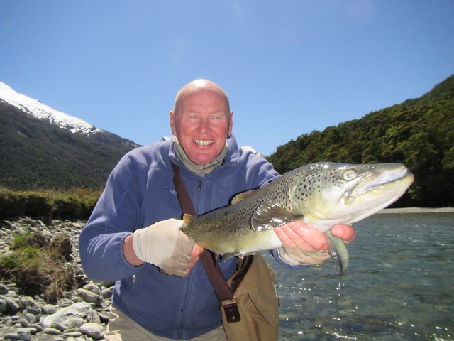 south island brown trout cedar lodge