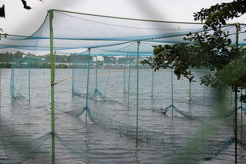A completely inundated Gandhi Nagar Cricket and Sports Club right beside the Adyar