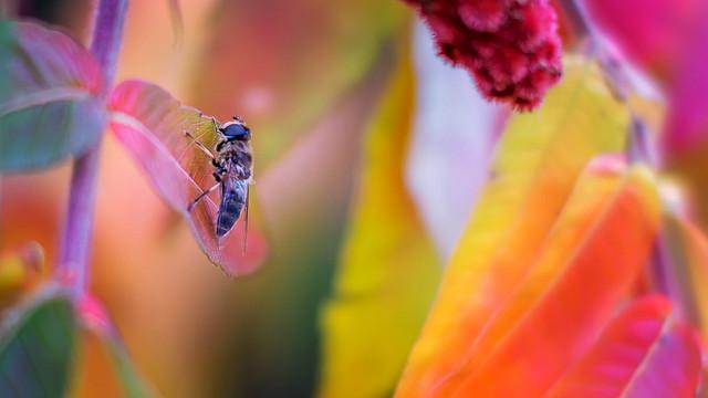 Autumn bee...