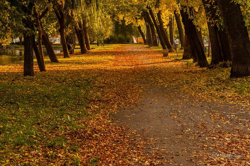 Autumn 013