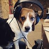 Hold on, lemme paws the music 🐶🎧 😄