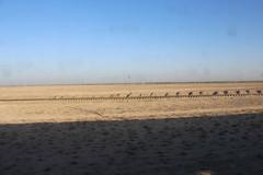 Desert in Uzbekistan near Buxoro