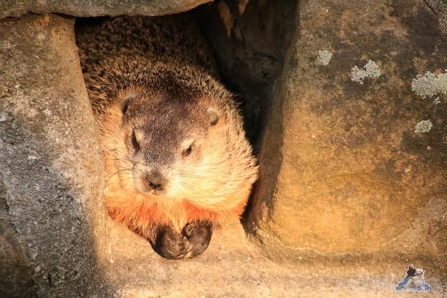 Zoo Berlin 14.08.2015  0113