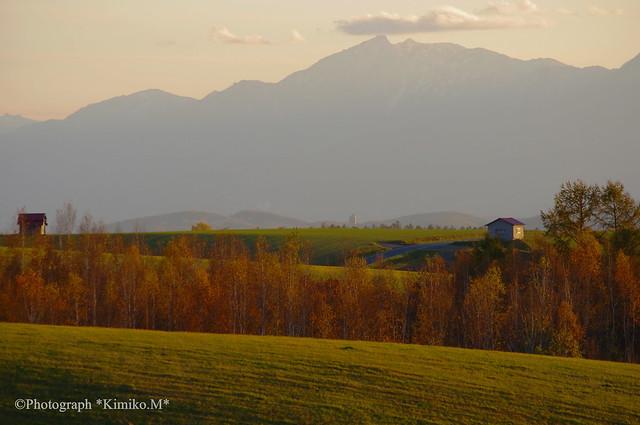 晩秋の丘②