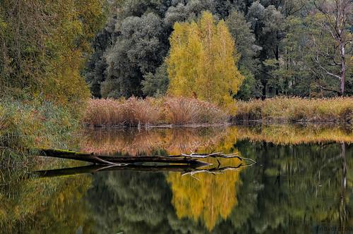 Herbst am Altarm Inn
