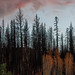 Sunset Over Burnt Trees by Jeffrey Sullivan