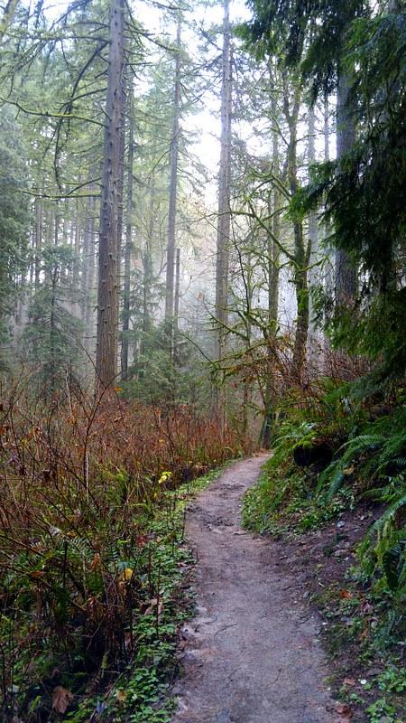 ForestPark9