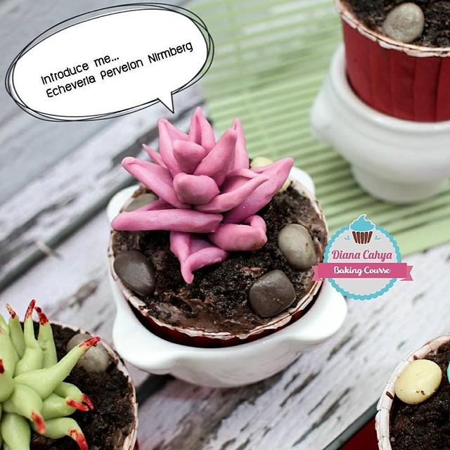 Introduce me... Echeveria Pervelon Nirmberg.  #Succulent #EcheveriaGoldenGlow #Cupcakes #Chocolate100% #NoFondant #Edible #DianaCahya #BakingTutorial #BakingClass #DianaCahyaBakingCourse #DeliciousChocolate #DeliciousChocoSucculentCupcake