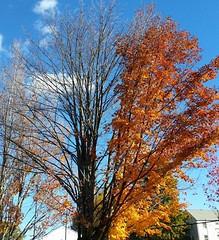 Hmmm, I guess this tree is only half excited about the fall weather. #halfbare #windblown #latergram #autumn