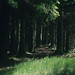 Small photo of Norway spruce by infant Taf Fechan. Neuadd reservoir