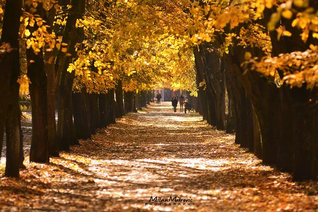 Autumn in park, Nikon D7100, AF-S Nikkor 400mm f/2.8D IF-ED II