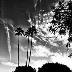 Contrails in the desert sky. #contrails #monochrome #blackandwhitephotography
