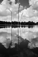 Etangs d'Art pailles - atana studio - Photo of Boisgervilly