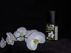 Orchidée - Photo of Avançon