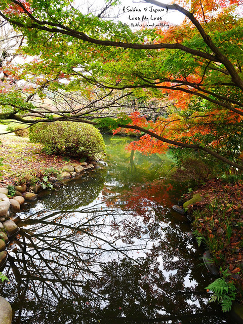 日本東京自由行新宿御苑庭園景點 (13)