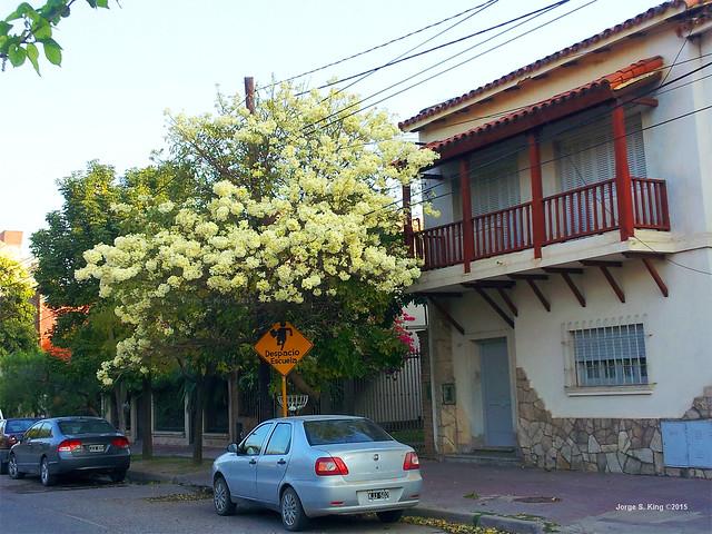 Lapachos 2015