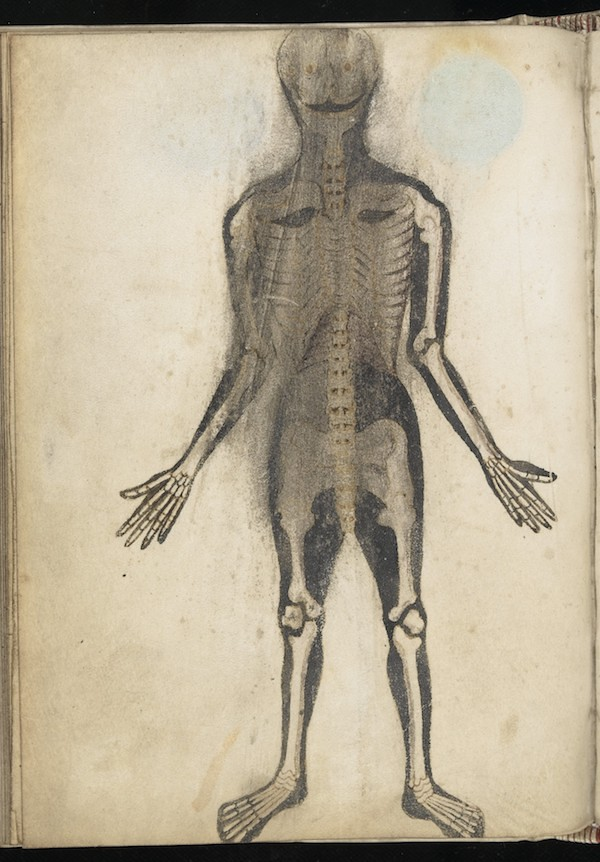 Anatomical Illustrations From 15th Century England The Public
