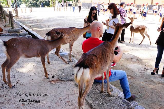 Japan 2013 - Day 02 Nara 04