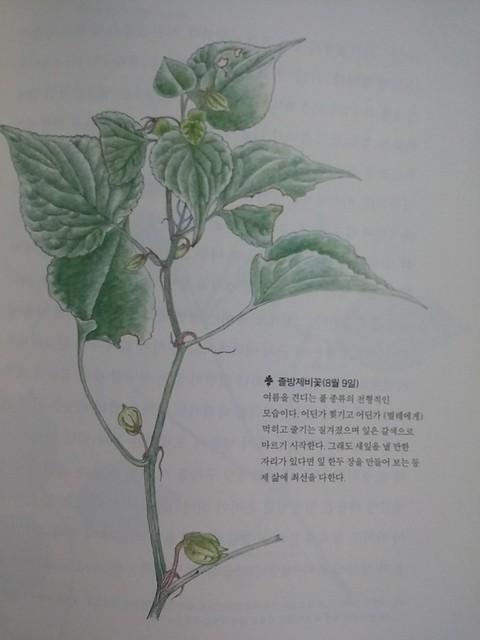 독서노트-열두 달 숲 관찰일기