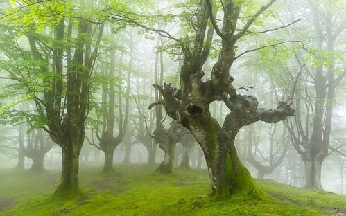Criaturas del bosque