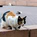 Park Kenedy cats