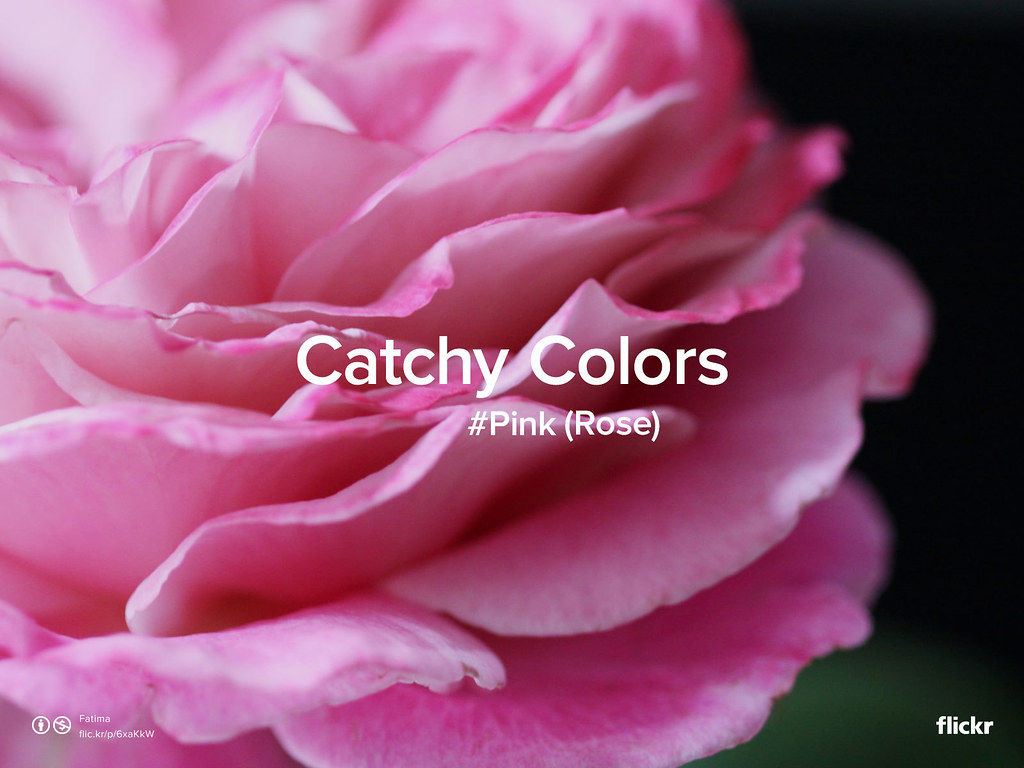 Catchy Colors : Rose #Pink