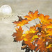 Autumn series by Nick Kenrick . AWAY