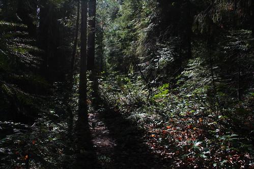 rogueriversiskiyounationalforest