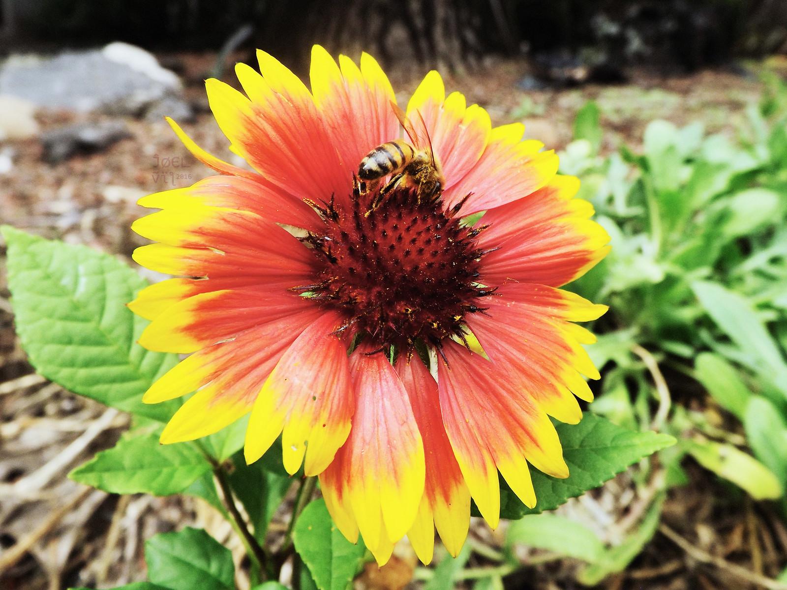 Psycho Bee