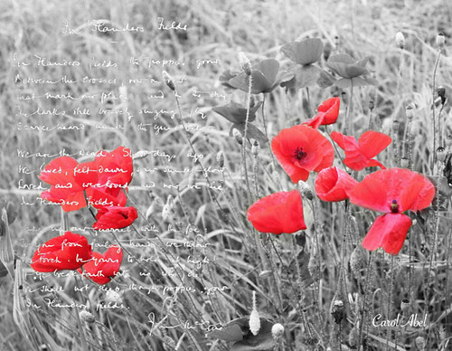 20161111-poppies-white-writing-w-signed