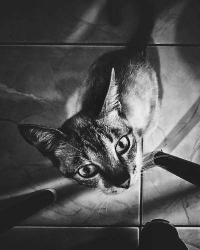 Olho de Gato • Cat's Eye | Tucano - Bahia -  | 21.10.2016 • #oMundoEmSuaParede • Follow @ludosmundos & @lubrito_ontheair