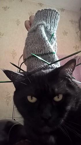 селфи с котом | ХорошоГромко.ру