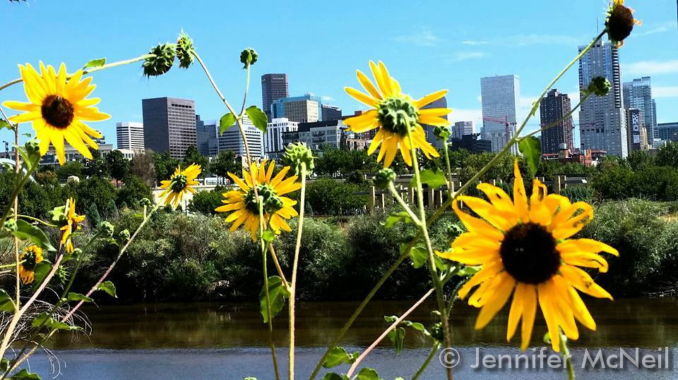 Flower and greenery accent a beautiful view of downtown Denver. (Jennifer McNeil)