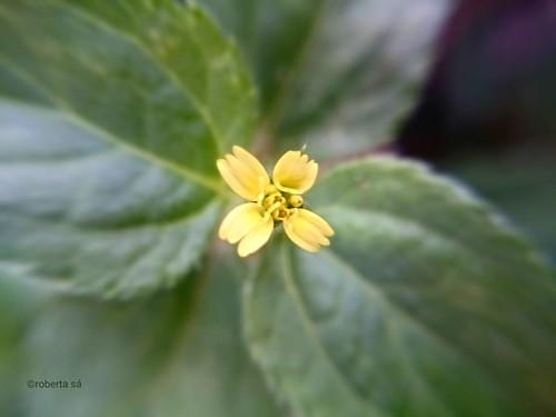 #flores #gramado #grama #flower #flowerinstagram #flowerstalking #lawn #macro #macrophotography #phonephoto #meditação #meditation #verdeolhar