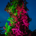 Colorful Tree by Craebby