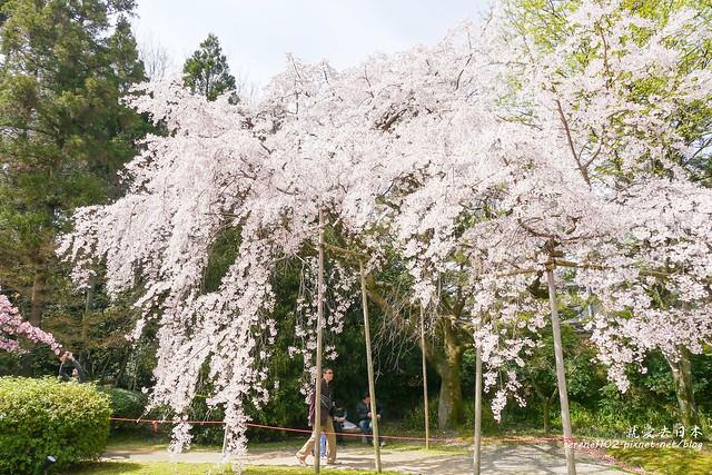 0402D8京都醍醐寺-1160320