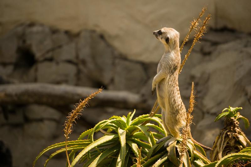 20151018 - 011 - MonteCasino Bird Garden